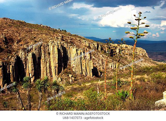 Cactus, Terra Blanca canyons, Guanajuato district, Mexico