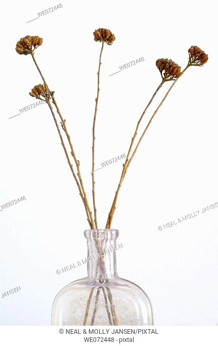 Dried Plant
