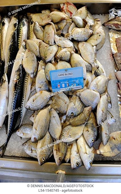 Fish Seafood Display Market Toulon France French Riviera Mediterranean Europe Harbor