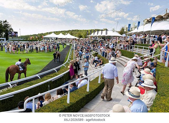 Racegoers watching the horses in the parade ring at Goodwood Racecourse