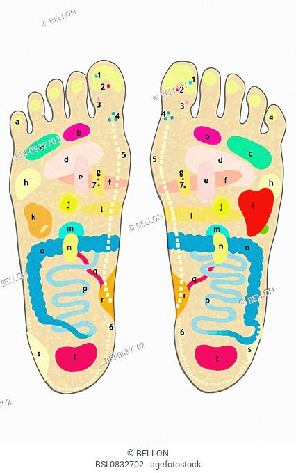 REFLEXOTHERAPY, DRAWING<BR>Reflex therapy is an alternative medical technique based on massage of different reflex zones identified on the feet