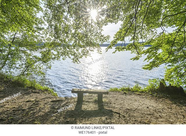 Bench on lake with sun, Lake Grosser Stechlinsee, Neuglobsow, Rheinsberg, Ruppiner Land, Brandenburg, Germany