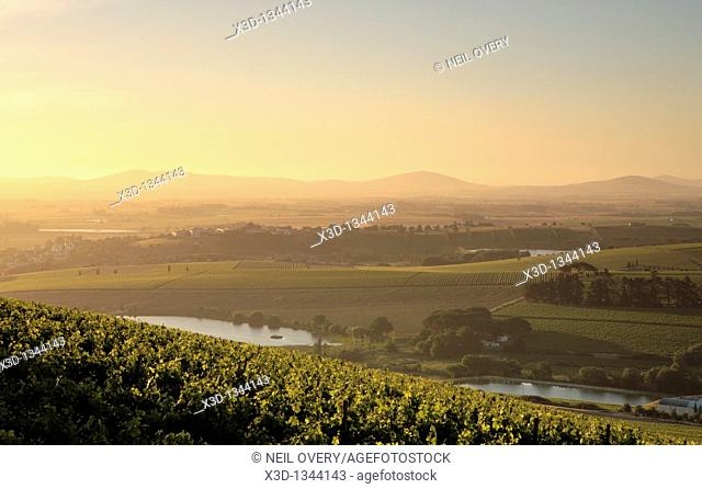 View over Vines, Cape Winelands, South Africa