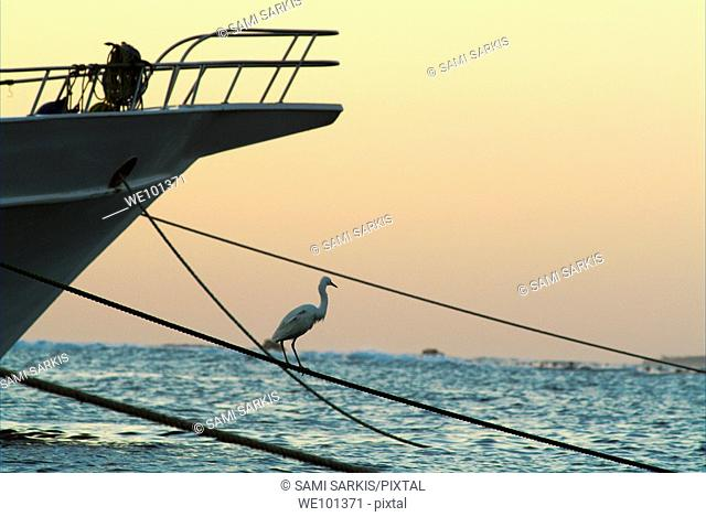 Heron on boat rope at sunrise on the Red Sea, Egypt