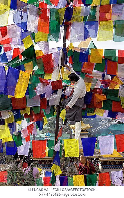 Man hanging Tibetan prayer flags in Lhagyal Ri, near Tsuglagkhang complex,McLeod Ganj, Dharamsala, Himachal Pradesh state, India, Asia