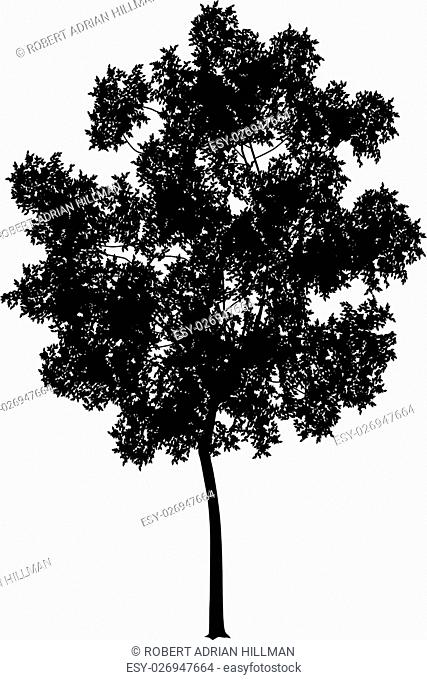 Detailed vector illustration of a generic tree silhouette