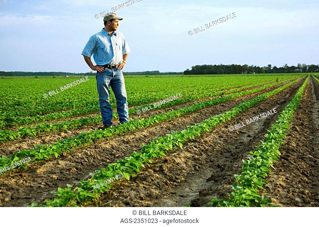 Agriculture - A farmer (grower) standing in his field inspecting his early growth crop of soybeans / Northeast Arkansas, USA