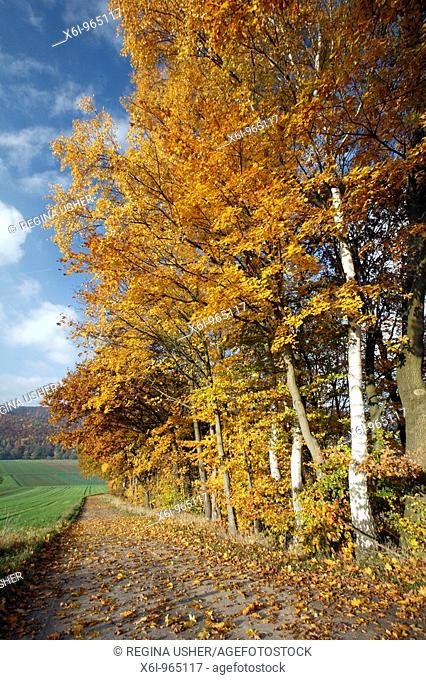 Mature Hedge, trees showing autumn colour, beside cycle path, Germany