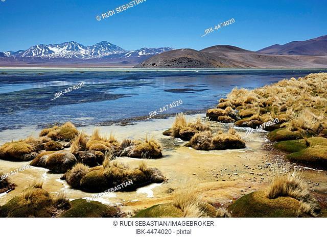 Salt lake in Altiplano Salar de Maricunga, Tres Cruzes National Park, northern Chile, Chile