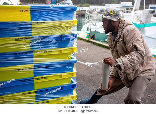 UNLOADING THE FISH AT THE WHOLESALE FISH MARKET, INSHORE FISHING, THE GILL NET BOAT 'LES OCEANES', PORT OF LORIENT (56), BRITTANY, FRANCE