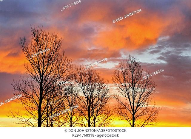 Sunset skies and bare deciduous trees, Garfield, Minnesota, USA