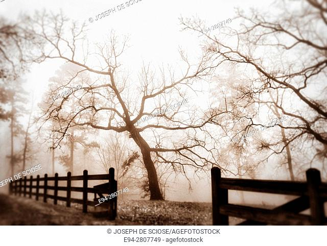 A landscape on a foggy day in the winter with trees and a fence line fading into the distance. Birmingham, Alabama
