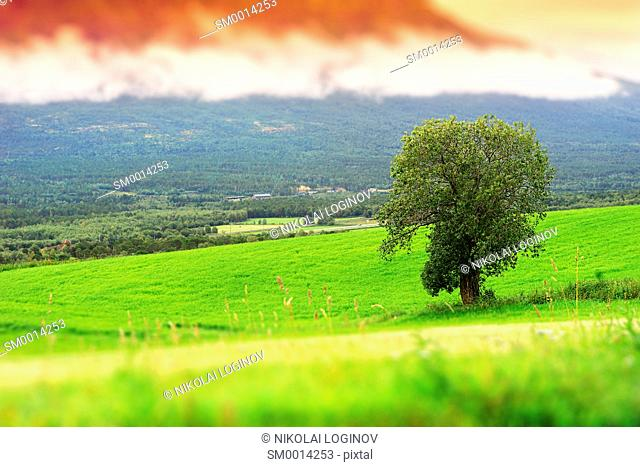 Norway toy landscape with lone tree background hd