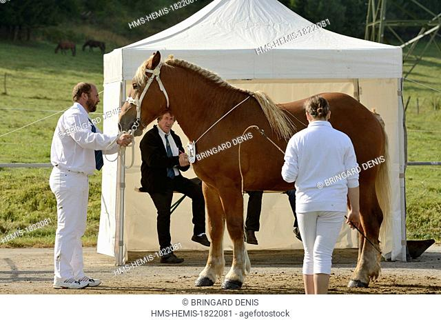France, Doubs, Maiche, national competition Trait Comtois horse, stallion passing the jury