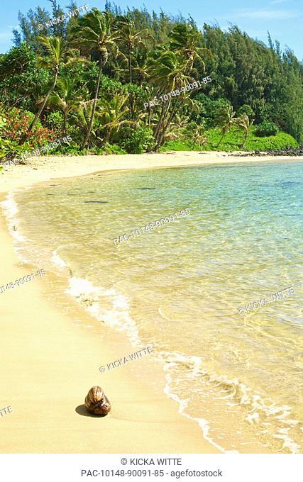 Hawaii, Kauai, Waikoko, Coconut on sandy beach