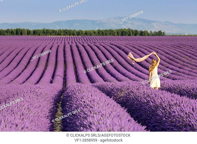 Blonde woman with scarf in a lavender field. Plateau de Valensole, Alpes-de-Haute-Provence, Provence-Alpes-Côte d'Azur, France, Europe
