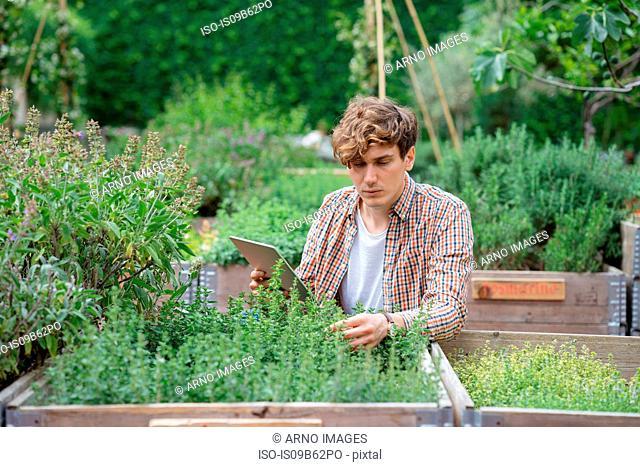Man in garden using digital tablet to identify plant