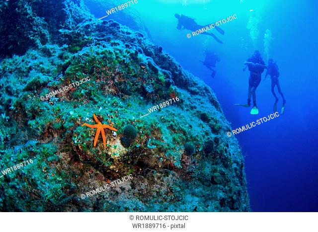 Scuba Diving, Men, Group, Red Sea Star, Reef