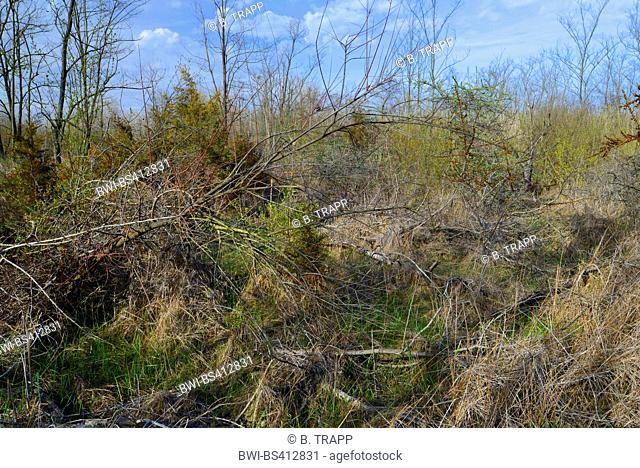 shrubland at the Danube delta, Romania, Dobrudscha, Biosphaerenreservat Donaudelta, SfÔntu Gheorgh