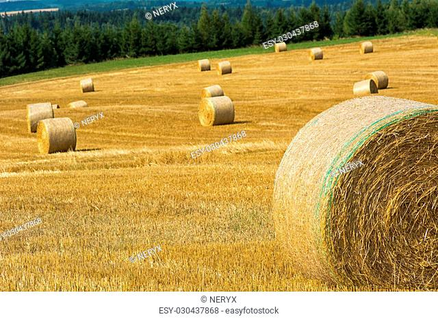 Mowed cornfield with straw bales and mountains in background