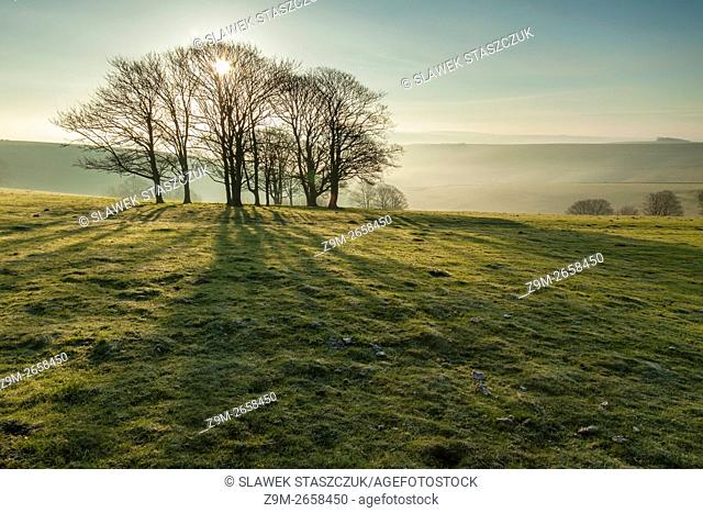 Spring morning on the South Downs near Steyning, West Sussex, England