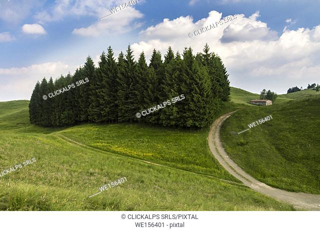 Trails on the green hills of Monte Farno in spring, Gandino, Valgandino, Val Seriana, Bergamo province, Lombardy, Italy