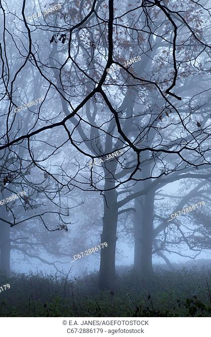 Felbrigg Park in autumn mist Norfolk UK