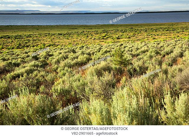 Sagebrush at Campbell Lake, Warner Wetlands Area of Critical Environmental Concern, Lakeview to Steens National Back Country Byway, Oregon