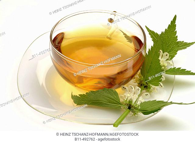 Lamium album, medicinal tea made of  white dead nettle, fresh parts and cup of tea, herb, medicinal plant
