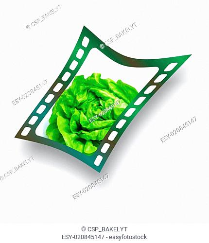 Film with fresh lettuce salad