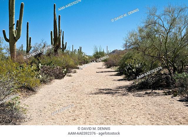 Saguaro National Park, AZ. dirt road