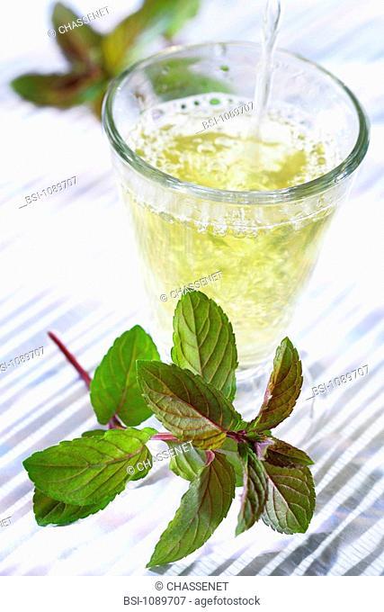 PEPPERMINT Peppermint herbal tea Mentha x piperita
