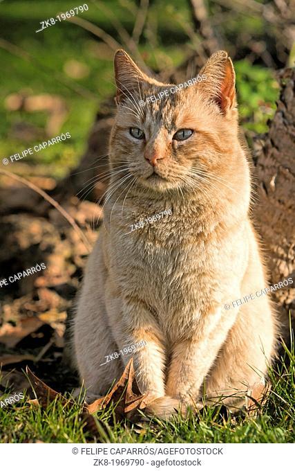 Portrait of a cute little orange cat outside