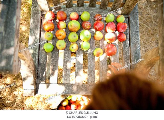 Apples drying on wooden chair