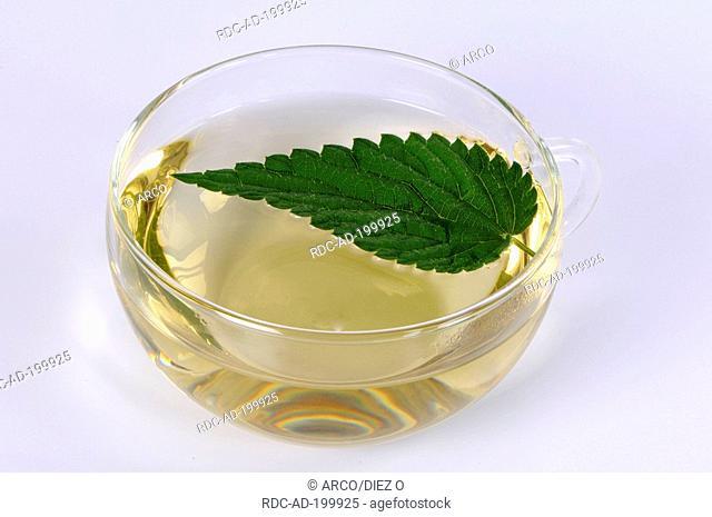 Cup of Nettle tea, Urtica dioica