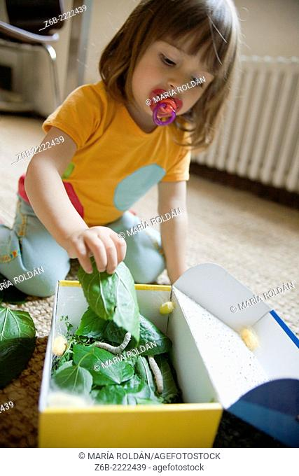 2 years old baby girl feeding silkworms with mulberry leaves