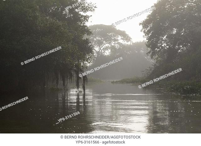 landscape with misty river and forest, Pantanal, Mato Grosso, Brazil