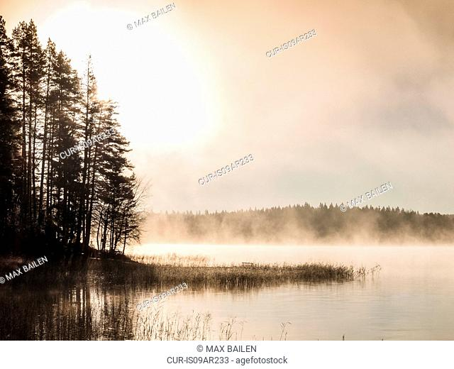 Silhouetted trees on misty lakeside at sunrise, Orivesi, Finland