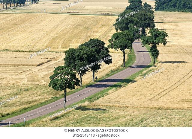 France, Champagne, Country road