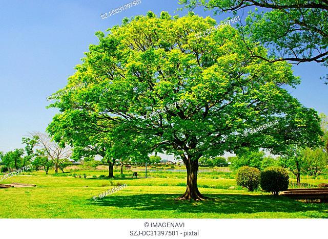 Suizenji Ezuko Park in spring, Kumamoto Prefecture, Japan