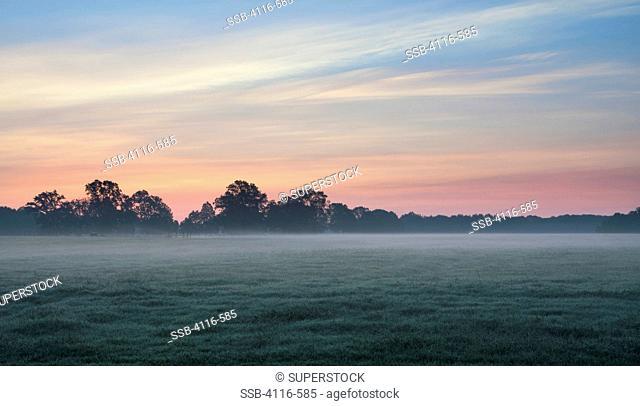 Sod field at dawn, Arkansas, USA