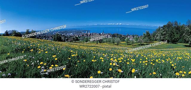90900017, mountain Rorschacher, scenery, spring, f