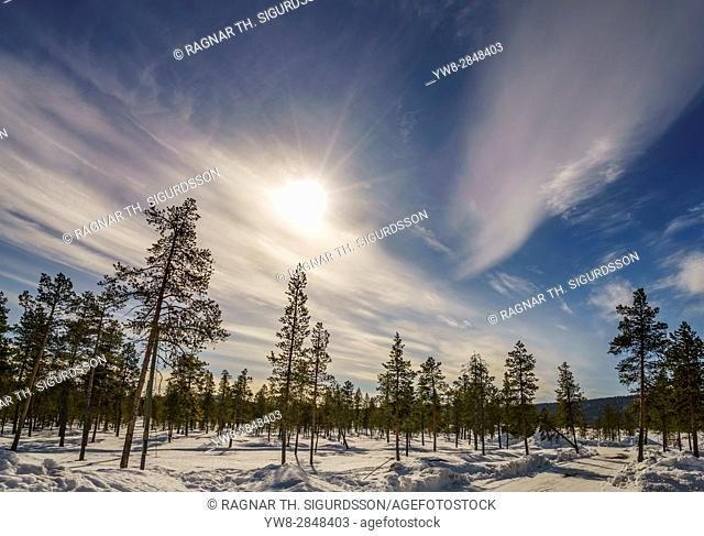Winter landscape, Lapland, Sweden