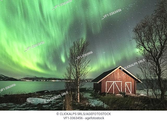 Red cabin and trees under the northern lights. Sandstrand, Troms county, Northern Norway, Norway