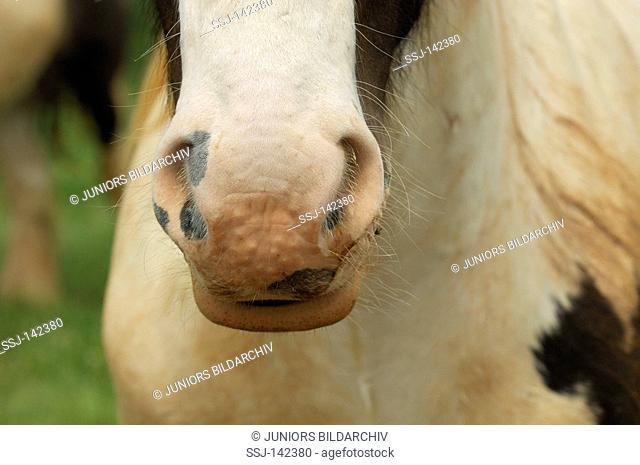 Tinker - nostrils