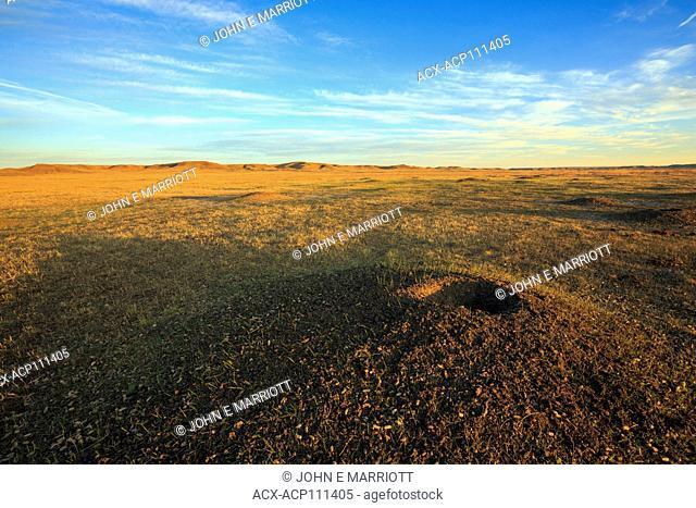 Prairie dog colony, Grasslands National Park, Saskatchewan, Canada