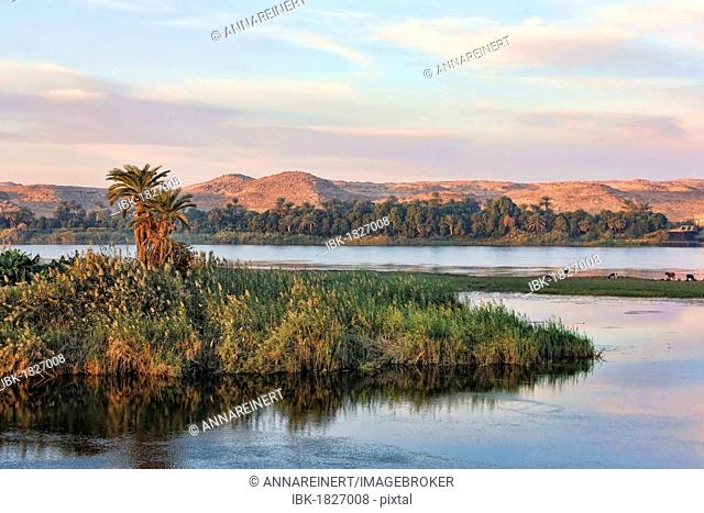 Island in the Nile in the morning light, Egypt, Africa