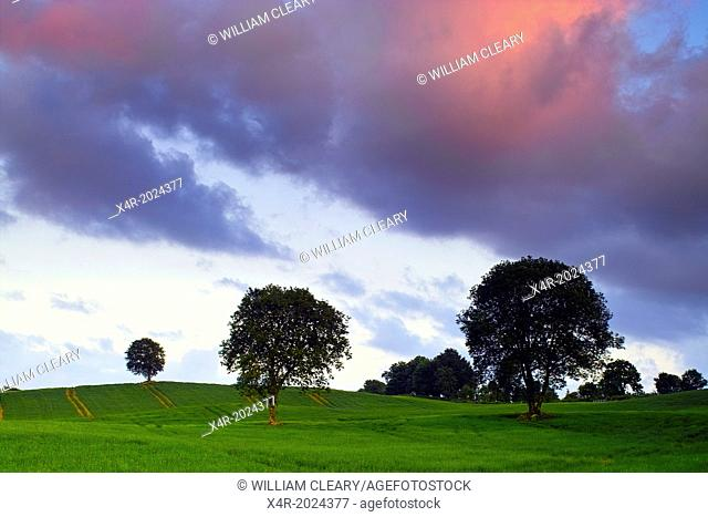Evening light over a field of barley, Coolnahay, County Westmeath, Ireland