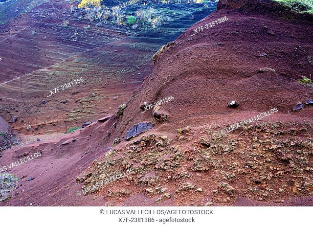 Detail of Croscat volcano,Garrotxa Natural Park,Girona province. Catalonia. Spain