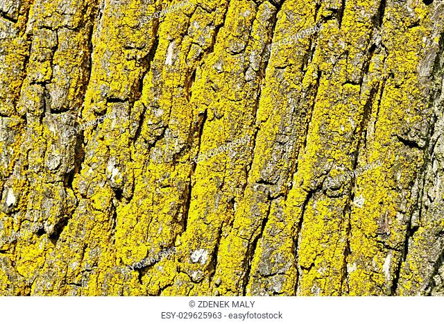 tree bark texture, pattern for background or backdrop use